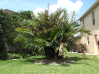 another-great-palmtree